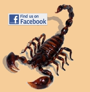 Follow the Creepy Crawly Show on Facebook